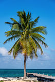 Palm Tree and Pier Stock Image