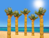 Palm tree with pineapples Royalty Free Stock Photos