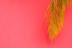 Palm tree on pink tropical background Royalty Free Stock Photography