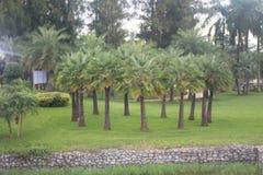 Palm tree plantation at park Royalty Free Stock Photos