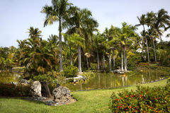 Palm Tree Pond. Palm trees set within a pond. Punta Cana, Dominican Republic Royalty Free Stock Images