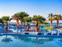 Palm Tree in the Pool Royalty Free Stock Image