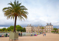 Palm tree in the pot. Luxembourg Garden, Paris Stock Images