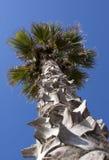 Palm tree - RAW format stock image