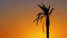 Palm Tree at Red Sunset. Tropical Palm Tree at Sunset. One long silhouette of palm trees on a background of red and orange sunset sky and the outlines of the stock footage