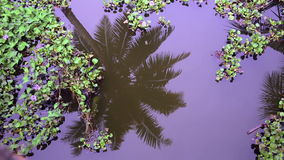 Palm tree reflecting in canal Stock Images