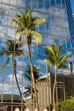 Palm Tree Reflection Royalty Free Stock Photo