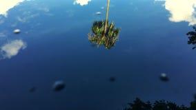 Palm Tree Reflection Blue Sky stock footage