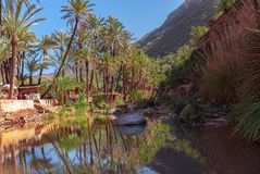 Palm tree reflection in Paradise Valley oasis Agadir morocco stock photography