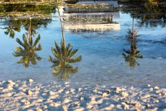 Palm tree reflection in saltwater Royalty Free Stock Photo