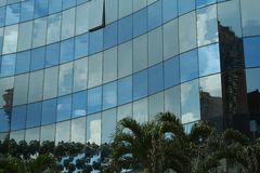 Palm tree reflections Royalty Free Stock Photo