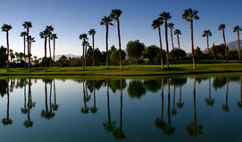 Palm Tree Reflections Stock Image