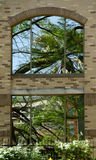 Palm tree reflections in windows of gray brick building at River Royalty Free Stock Image