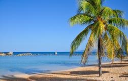 Palm Tree on Caribbean Beach. Palm tree on remote sand beach, Cuba Stock Photography