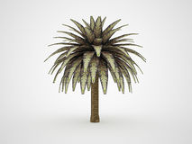 Palm tree rendered Stock Photography
