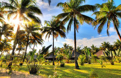 Palm tree resort Stock Images