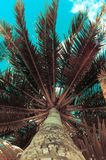 Palm tree with Retro summer filter effect Royalty Free Stock Photo