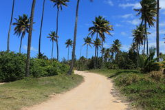 Palm tree road Stock Images