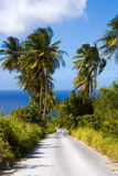 Palm tree road Stock Image