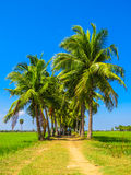 Palm Tree Road Stock Photos
