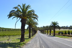 Palm tree road. Continental palm tree road with vineyard on background stock images