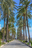 Palm tree road at mallorca in the summer Stock Photography