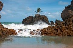 Palm Tree on Rock Royalty Free Stock Photos