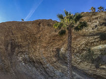 Palm tree rock background at White Point beach Stock Images