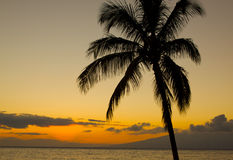 Palm Tree in Romantic Sunset. A palm tree is silhouetted in a romantic sunset Royalty Free Stock Photos