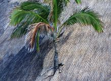 Palm tree on a roof Royalty Free Stock Image