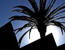 Palm tree and roofline Royalty Free Stock Image