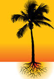 Palm tree and roots royalty free illustration