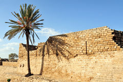Palm tree and ruins at Caesarea Royalty Free Stock Photography