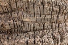 Palm tree`s bark texture royalty free stock image