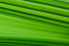 Palm tree`s green Leaf texture background Royalty Free Stock Images