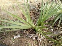 Palm tree& x27;s stock photography