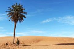 Palm-tree. In Sahara desert Stock Photo