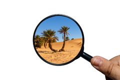Palm tree in Sahara desert royalty free stock photos