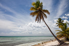 Palm Tree in Sahona Island Stock Photography