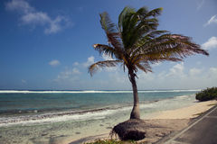 Palm Tree and the San Andres Island Beach. On the side of the road Royalty Free Stock Photo