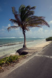 Palm Tree and the San Andres Island Beach. On the side of the road Royalty Free Stock Images