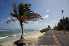 Palm Tree and the San Andres Island Beach. On the side of the road Stock Photo