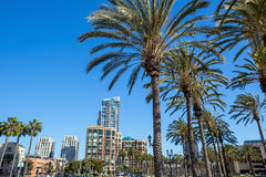 Palm tree and San Diego Stock Images