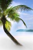 Palm tree on sand beach Stock Photo