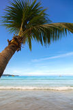 Palm tree on the sand beach Royalty Free Stock Photo
