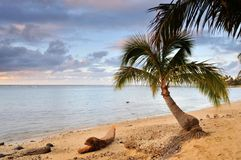 Palm Tree and Sand Beach in Hawaii Royalty Free Stock Photography