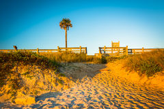 Palm tree and sand dunes in Palm Coast, Florida. Royalty Free Stock Photography