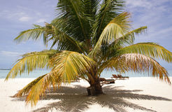 Palm tree on a sandy beach Royalty Free Stock Photos