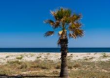 Palm tree. On a sandy  beach Royalty Free Stock Image