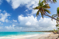 Palm tree on sandy beach. Coast of Atlantic ocean Stock Image